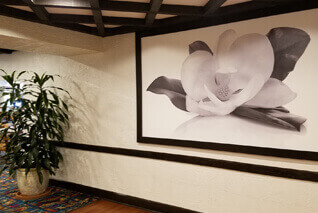Brighten your hotel with a stunning mural