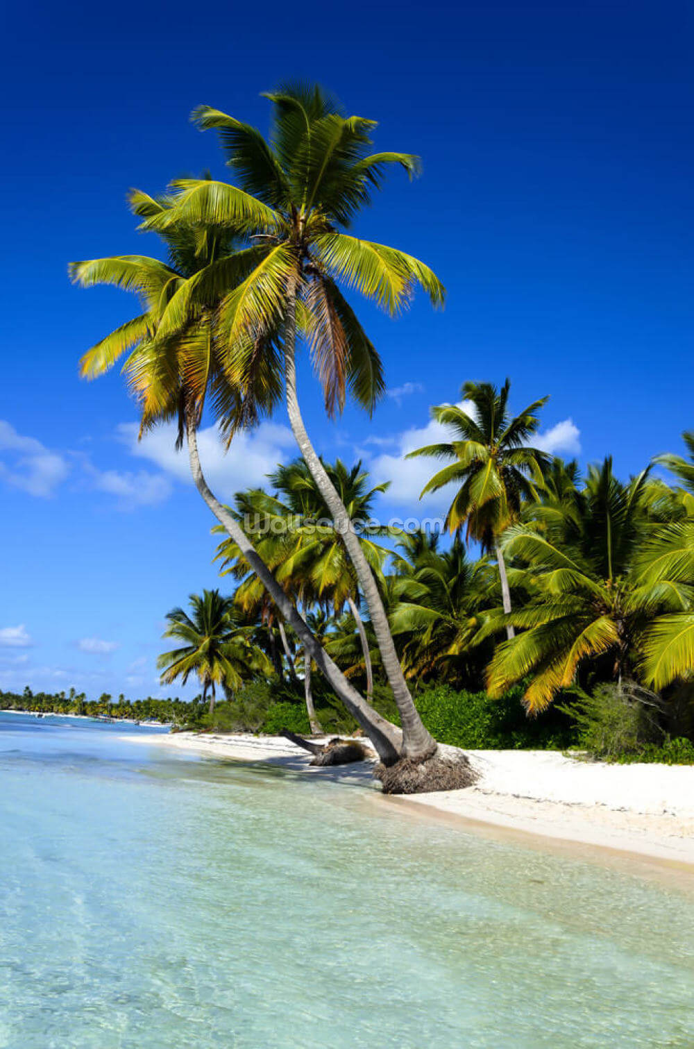 Beach Palm Leaf Wallpaper Image Nuwallpaper Hd