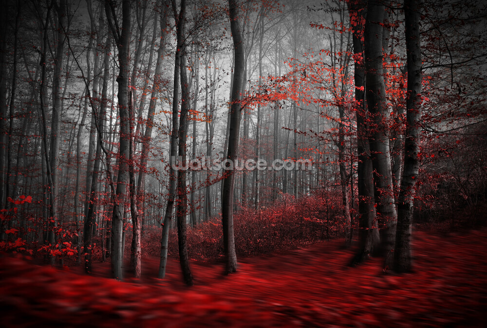 Red Carpet Forest Wall Mural Wallsauce Us