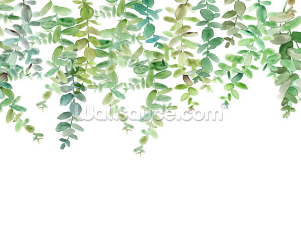 Evergreen Hanging Eucalyptus Wallpaper Wallsauce Us