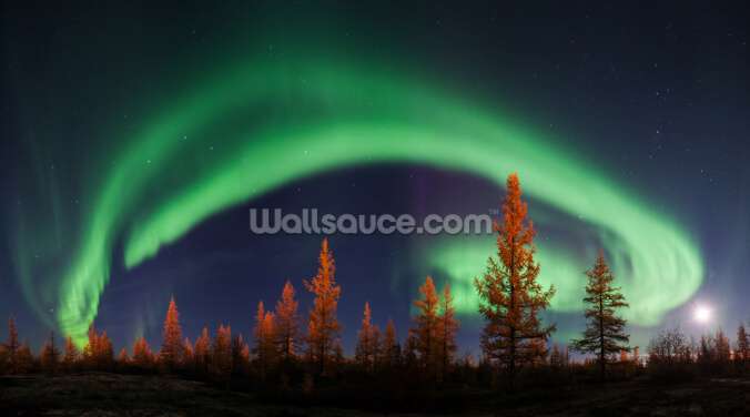 Northern Lights Bow Wallpaper Wall Murals