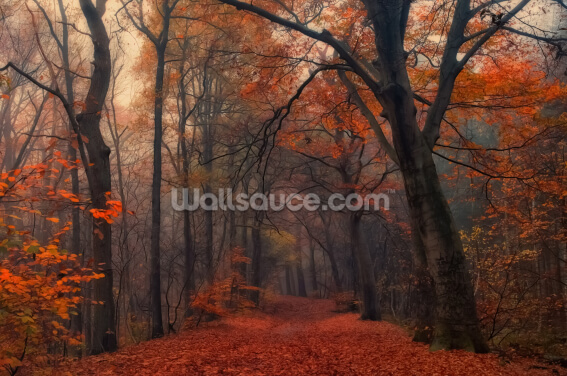 Decorative Forest Wallpaper Wall Murals