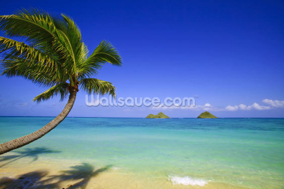 Hawaii, Oahu, Lanikai, Palm Tree Over Blue Ocean Wallpaper Wall Murals