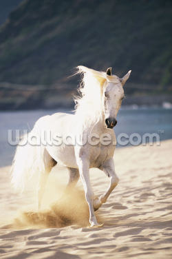 White Horse Running On The Beach Wallpaper Wall Murals
