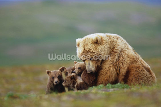 Grizzly Bear Sow with Young Cubs Wallpaper Wall Murals