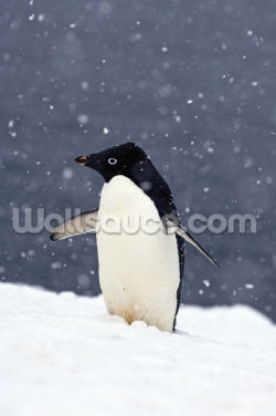 Adelie Penguin Standing In Fresh Falling Snow Wallpaper Wall Murals
