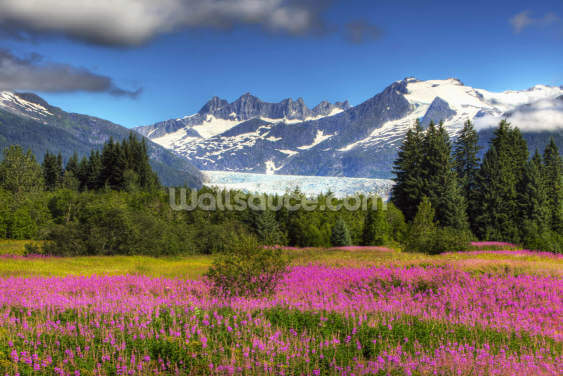 Mendenhall Glacier with a Field of Fireweed Wallpaper Wall Murals