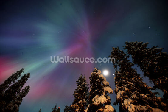 Aurora Corona & Moon Over Crow Creek Wallpaper Wall Murals