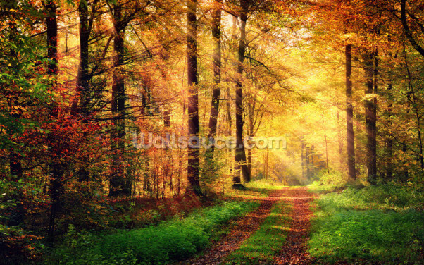 Autumn Forest with Rays of Warm Light Wallpaper Wall Murals