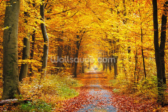 Autumn Forest with Yellow Leaves Wallpaper Wall Murals