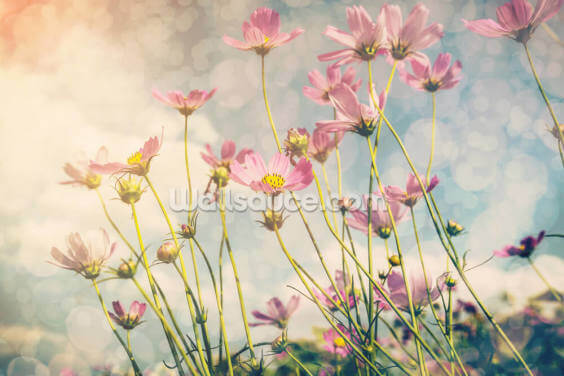 Cosmos Flower with Vintage Tones Wallpaper Wall Murals