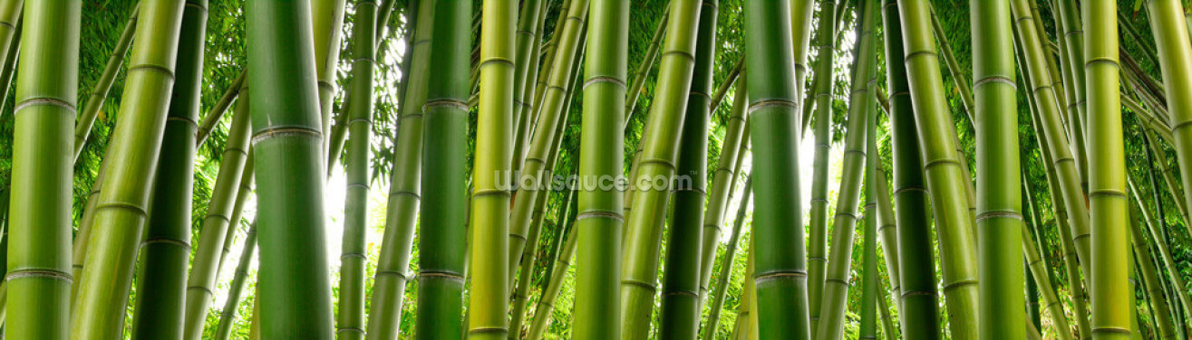 Bamboo Jungle Wallpaper Wall Murals