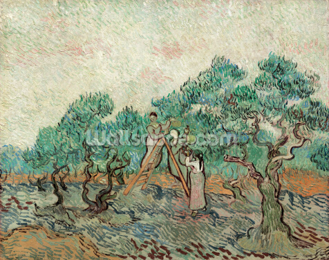 The Olive Grove, 1889 (oil on canvas) Wallpaper Wall Murals