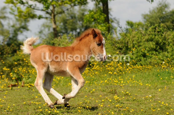 Spring Foal Wallpaper Wall Murals