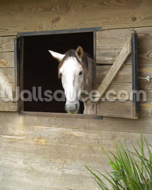 Stabled Horse Wallpaper Wall Murals