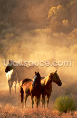 Wild Horses Wallpaper Wall Murals