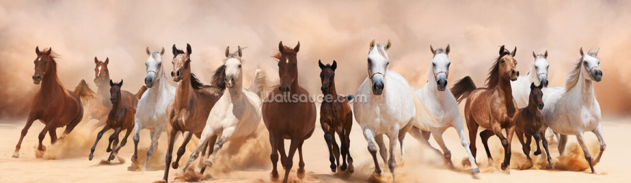 Herd of Horses Panoramic Wallpaper Wall Murals