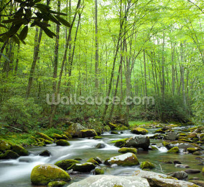 Jungle Stream Wallpaper Wall Murals