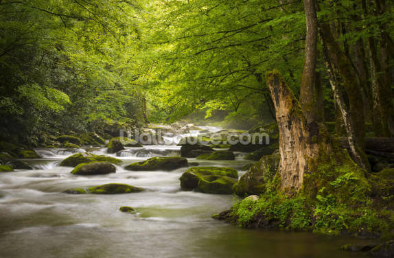 Great Smoky Mountains Tremont River Wallpaper Wall Murals