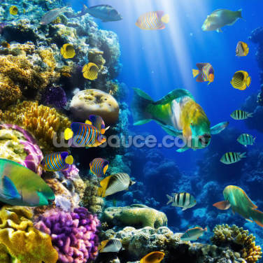 Coral Colony and Coral Fish Wallpaper Wall Murals