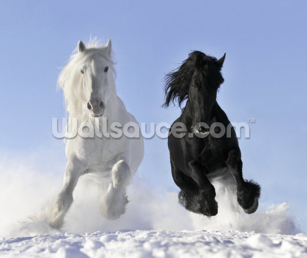Horses in Snow Wallpaper Wall Murals