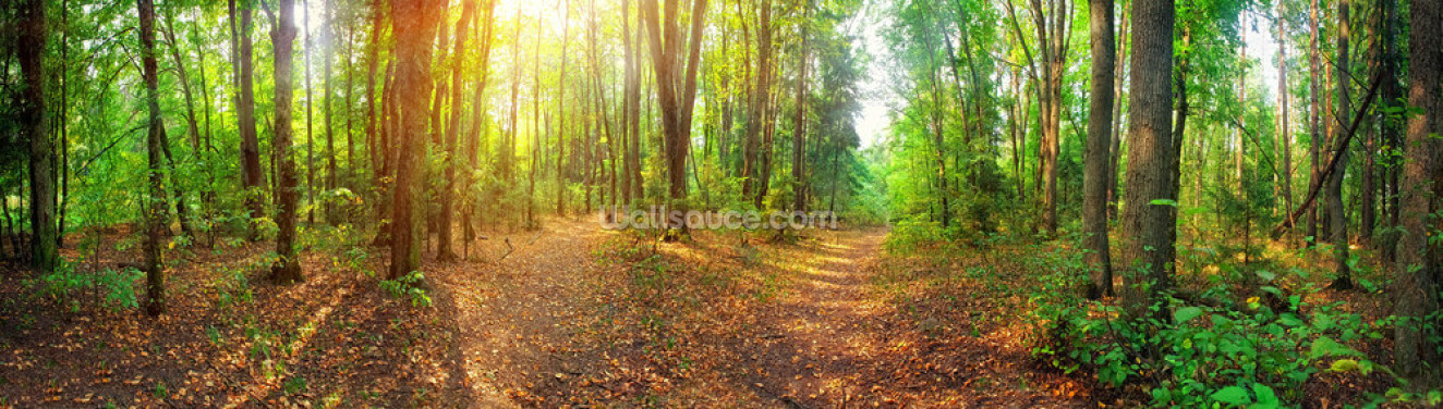Sunny Day Forest Panorama Wallpaper Wall Murals