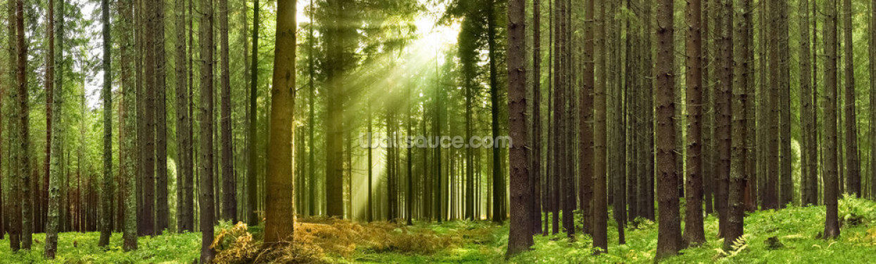Panoramic Woodland Wallpaper Wall Murals