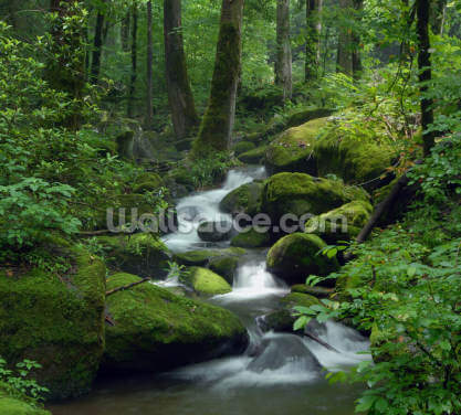 Mossy Waterfall Wallpaper Wall Murals