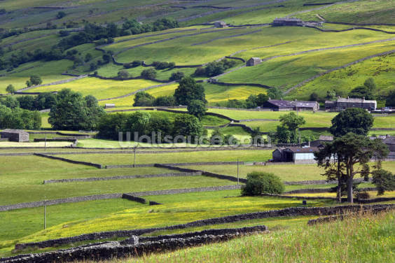 Yorkshire Dales National Park Wallpaper Wall Murals