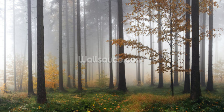 Misty Autumn Forest Wallpaper Wall Murals