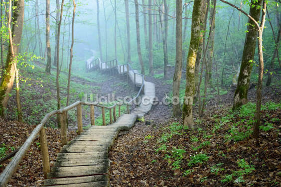 Foggy Forest Stairway Wallpaper Wall Murals
