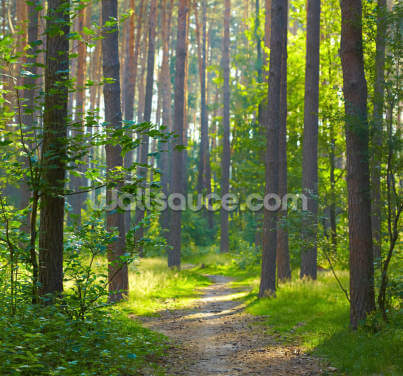 Forest Sunrise Wallpaper Wall Murals
