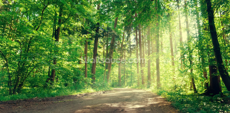 Forest Track Sunlight Wallpaper Wall Murals
