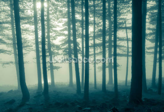 Foggy Forest Wallpaper Wall Murals