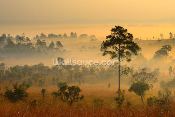 Morning Mist Wallpaper Wall Murals