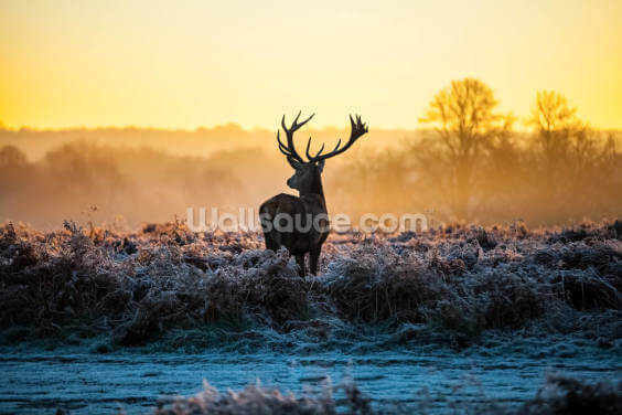 Red Deer Sunrise Wallpaper Wall Murals