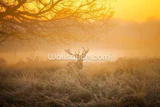 Red Deer in Morning Sun Wallpaper Wall Murals
