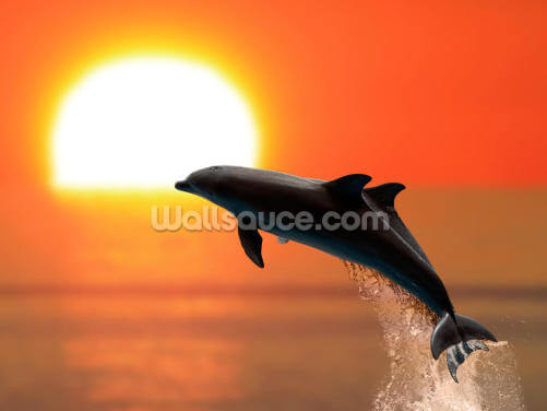 Dolphins at Sunset Wallpaper Wall Murals