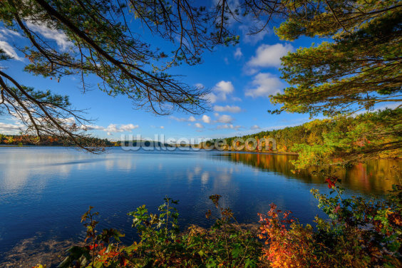 Forest Lake in Autumn Wallpaper Wall Murals