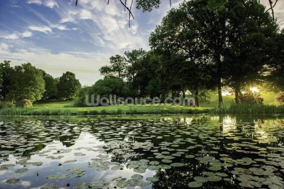 Dawn Lily Pond, The Hertfordshire Golf & Country Club, England Wallpaper Wall Murals