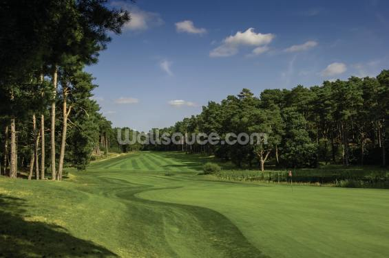 Glorious Pine Ridge, Pine Ridge Golf Club, Surrey, England Wallpaper Wall Murals