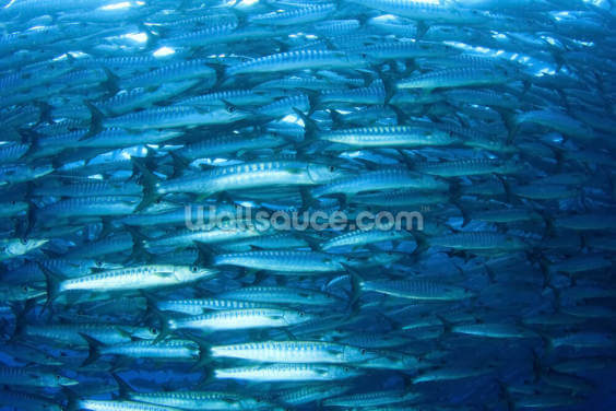 Barracuda Fish Wallpaper Wall Murals