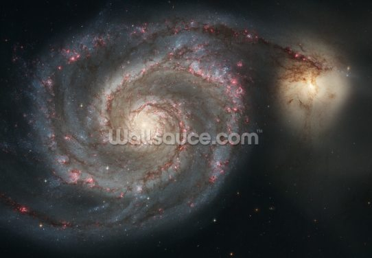 Out of This Whirl: the Whirlpool Galaxy (M51) and Companion Galaxy Wallpaper Wall Murals