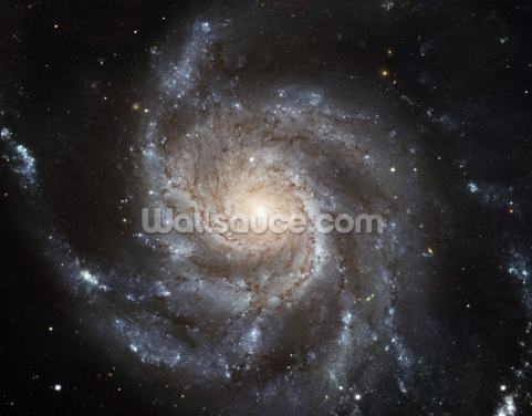 Giant Spiral Disk of Stars Wallpaper Wall Murals