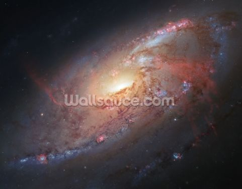 Cosmological Masterpiece Wallpaper Wall Murals