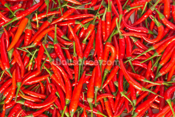Hot Chilli Peppers Wallpaper Wall Murals