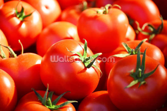 Tomatoes Wallpaper Wall Murals