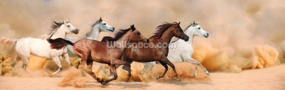 Galloping Herd of Horses Wallpaper Wall Murals
