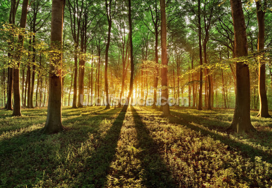 Spring Forest Wallpaper Wall Murals