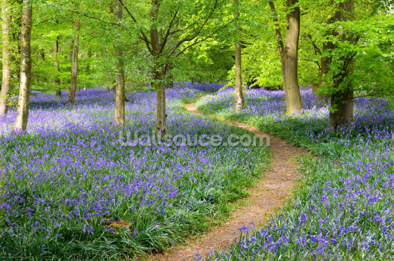 Bluebell Woodland Wallpaper Wall Murals